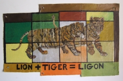 Ligers and Tigons